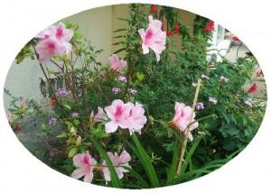 恵子の庭2a
