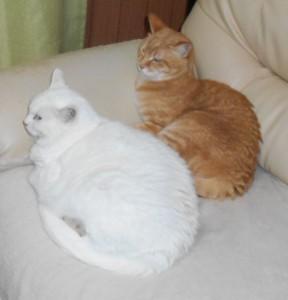 ネコさん2